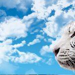El tigre que vive en el maletero