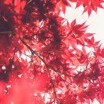 Kaizen: la regla del minuto o el método japonés para combatir la pereza
